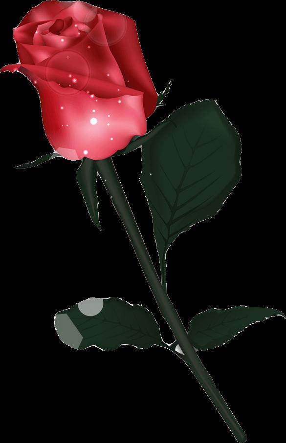 PC表示の薔薇
